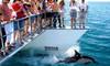 Auckland Whale & Dolphin Safari Ticket