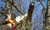 Tree Maintenance Services by Two Workers