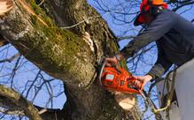 Professional Tree Maintenance Work
