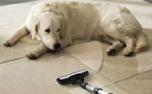 Professional Home Carpet Shampoo