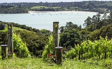 Waiheke Winter Vineyard Wine Tasting Tour