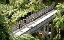 Whanganui Five-Day Canoe Trip