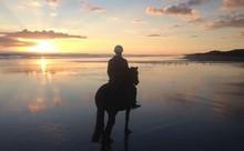 Muriwai Beach Horse Trek