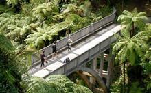 Five-Day Guided Whanganui River Canoe Tour