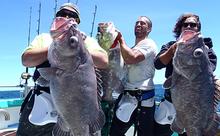 Cook Strait Deep Sea Fishing Experience
