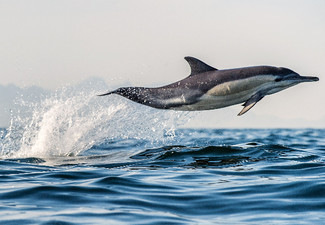 Half-Day Dolphin & Wildlife Cruise for Two People - Options for a Family Pass & up to Eight People