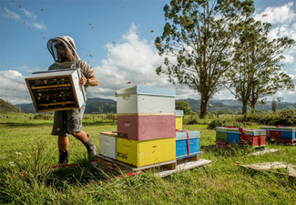 Beekeeping Teaser Experience incl. Take-Home Honey - Options for Three Other Experiences Available