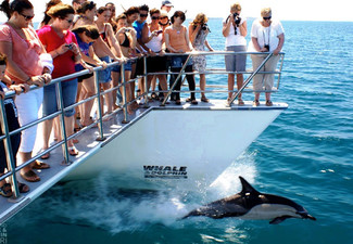 Auckland Whale & Dolphin Safari Adult Ticket 
