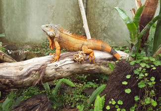 General Admission for NZ's Only Reptile Park  - Options for Child, Adult & Family Pass