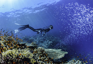 SSI Freediving Course & Spearfishing Charter Package for One - Options for Two People or Spearfishing Charter Available