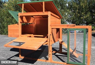 Deluxe Backyard Chicken Coop