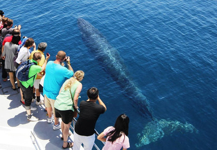 Up to 50% off Auckland Whale & Dolphin Safari Tickets - Adult & Child Options Available