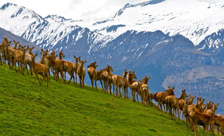 $84 for a 2½ Hour Wanaka Highlights Safari (value $140)