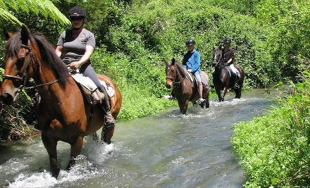 $29 for One-Hour of Horse Riding (value $60)