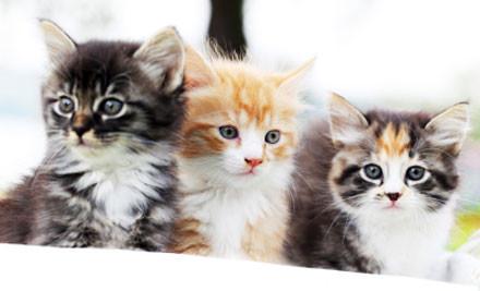 $20 for $60 Cat Services Voucher (value $60)