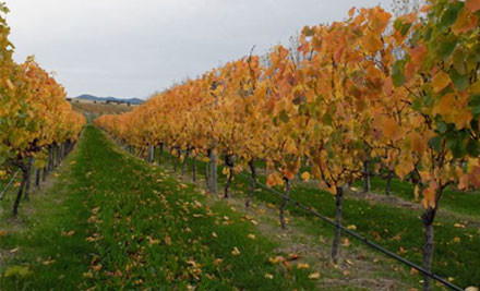$29 for a 60-90-Minute Grape to Glass Wine Tour for Two People at Murdoch James Estate, Martinborough (value $70)