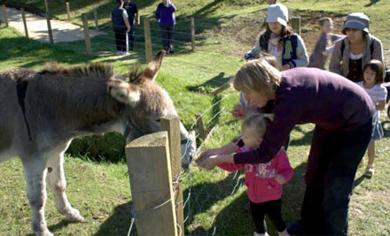 $20 for an Adult & $10 for a Child for a BBQ Buffet Lunch, Farm Park Entry, Rabbit Shearing Show and Free Bag of Food or $40 to add Clay Bird Shooting (value up to $80)