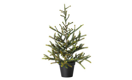 $30 for a Live Potted Christmas Tree Delivered to the North Island or $35 for South Island Delivery