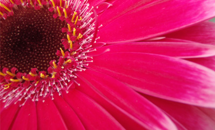 $26 for 20 Gerbera Stems incl. Tauranga & Mount Maunganui Delivery (value $48)