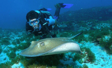 $390 for a Certified Open Water Dive Course incl. all Equipment & a One-Day Trip to the Poor Knights Islands (value $780)