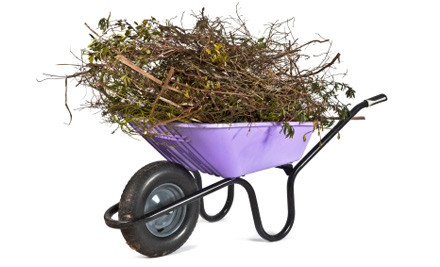 $12 to Get Your Christmas Tree Picked Up & Disposed Of on Wednesday 9th January (value $30)