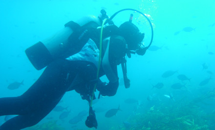 $349 for a Padi Open Water Dive Certificate incl. $250 Worth of Vouchers (value $800)