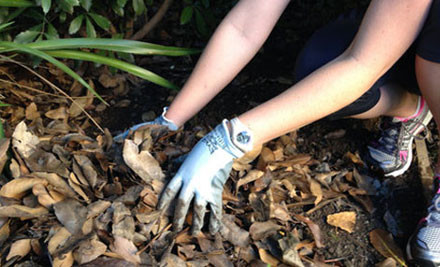 $25 for Four Pairs of Gardening & Handyman Gloves in One of Three Styles incl. Nationwide Delivery