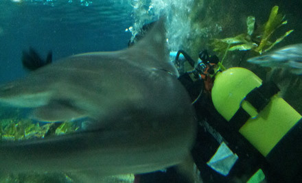 $99 for a 40-Minute Scuba Dive with Sharks, No Experience Necessary (value $169)