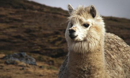 $2,850 for an Inca Trail & Machu Picchu 12-Day Trip incl. Guide, Permit, Meals & Gear