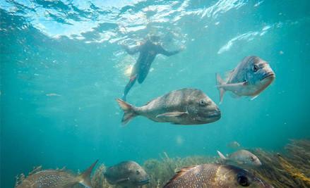PADI Guided Snorkel Experience