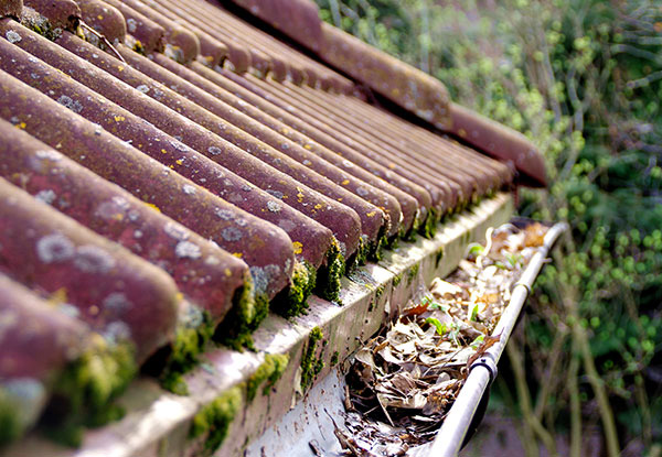 Roof Treatment for Moss, Mould & Lichen, incl. Gutter Inspection