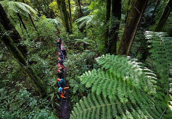 Three-Hour Original Rotorua Canopy Tour & GoPro Footage Combo for an Adult - Options for a Child Available