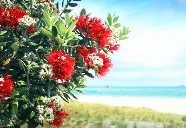 Native Nz Pohutukawa Tree Grabone Nz