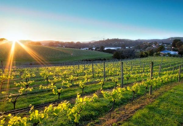 Full-Day Waiheke Island Wine Tour - Option to incl. EcoZip Lining, Fishing or Segway