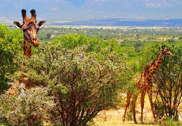 Per-Person, Family-Share Seven-Night African Safari Package incl. Accommodation, Main Meals, Elephant Orphanage Visit, Giraffe Sanctuary, 4x4 Game Drive & More
