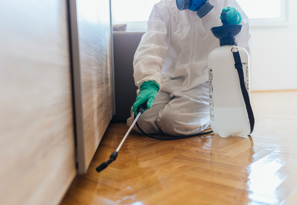 Interior & Exterior Pest Control Service for a Three-Bedroom House