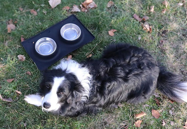 Stainless Steel Dog Bowl & Silicone Mat Set -  Two Sizes Available