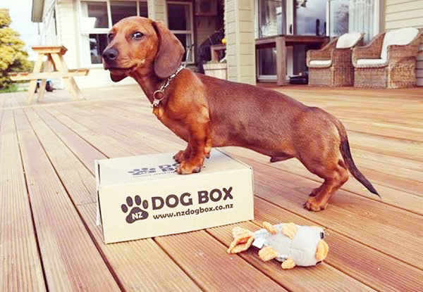 $25 for a Surprise Box of Dog Treats & Products – Options Available for Different Sized Dogs