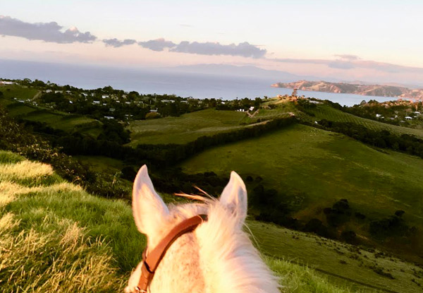 Private 60-Minute Waiheke Horse Trek Experience