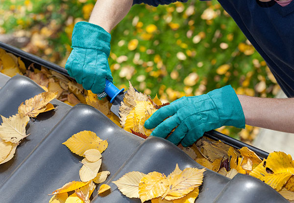 Gutter Clean & Debris Removal - Options for up to a Six-Bedroom Single Storey Home