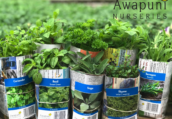 10 Bundles of Mixed Herb Plants