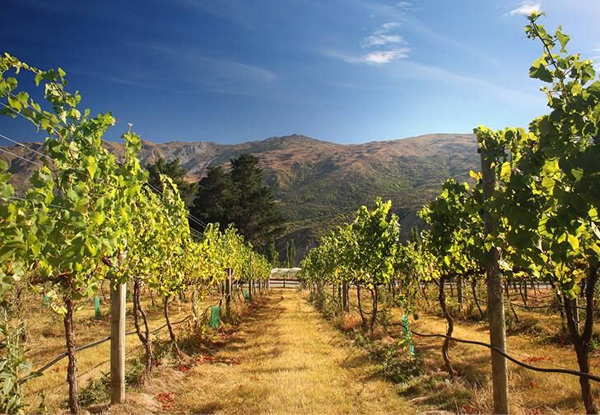 All Day Pass on the Wine Hopper Bus Tour from Queenstown to the Surrounding Vineyards - Options for One Person & Two People Available