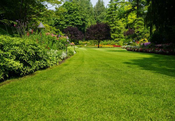 Spring Lawn Treatment Service - Options for Lawn Area up to 320m2