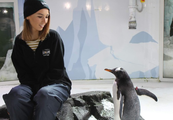 Chill with the Penguins with SEA LIFE Kelly Tarlton's Penguin Passport