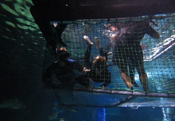 Shark Cage Adventure at SEA LIFE Kelly Tarlton's